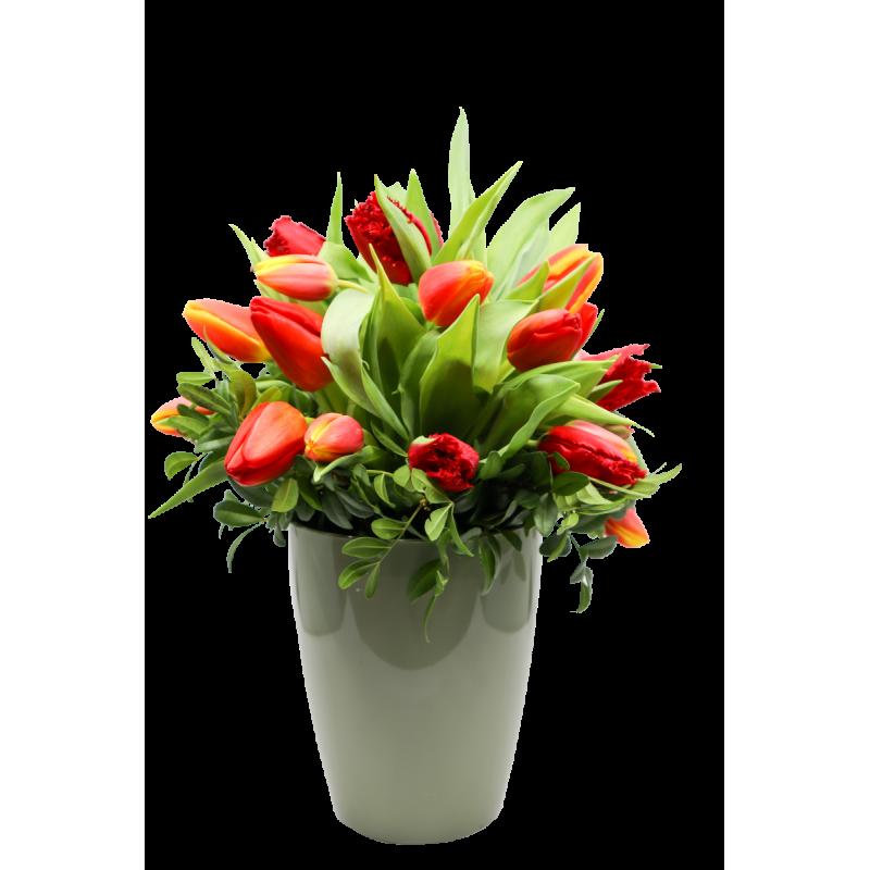 tulipas-valery