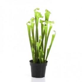 Planta Artificial Sarracenia
