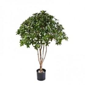 Planta Artificial Euonymus Japonicus
