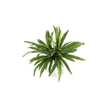 Planta Artificial Asplenium
