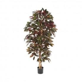 Planta Artificial Capensia
