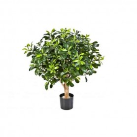 Planta Artificial Pittosporum Bola