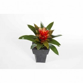 Planta Artificial Bromelia
