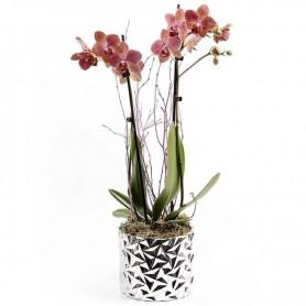 Vaso com Orquídea Phalanopsis - ORQUÍDEA da FELICIDADE