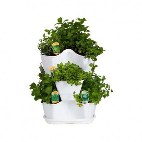 Jardim de plantas aromáticas frescas