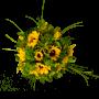 Ramo florido campo de girassóis