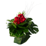 Rosas Vermelhas ao Peito
